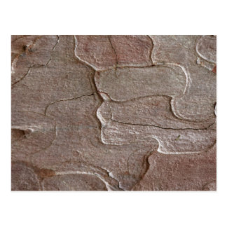 Macro photo of pine bark postcard
