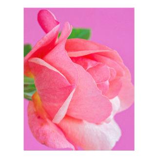 Macro pink rose flower letterhead