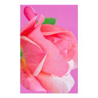 Macro pink rose flower stationery