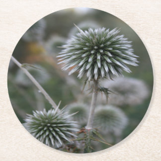 Macro Seed Head of Round Headed Garlic Round Paper Coaster
