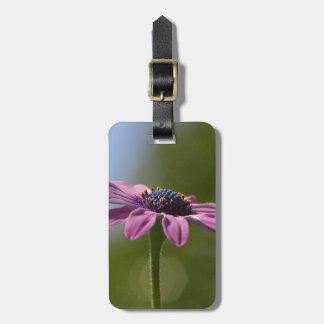 Macro Shot Of A Purple Osteospermum Luggage Tag