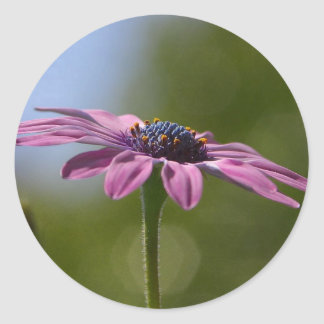Macro Shot Of A Purple Osteospermum Round Sticker