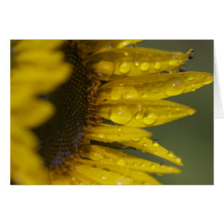 Macro Sunflower Card