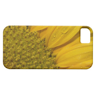 Macro Sunflower With Raindrops Case For The iPhone 5