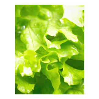 Macro view of the leaves of lettuce in a salad letterhead
