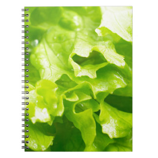 Macro view of the leaves of lettuce in a salad notebooks