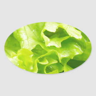 Macro view of the leaves of lettuce in a salad oval sticker