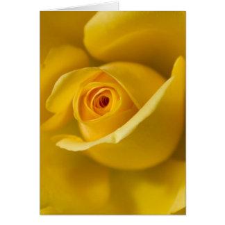 Macro Yellow Rose Card