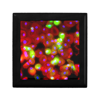 Macrophage Cells Science Art Gift Box