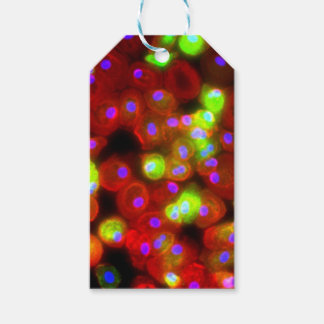 Macrophage Cells Science Art Gift Tags