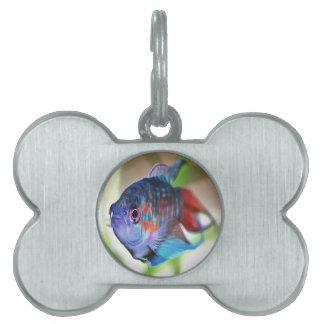 Macropodus opercularis – Paradise Fish Pet Tag