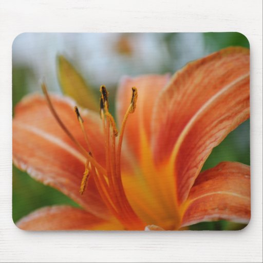 Macros Day Lily Mousepad