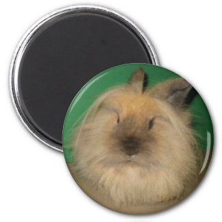Mad Bunny Magnet