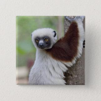 Madagascar, Ankarafantsika Reserve, Ampijoroa. 2 Inch Square Button