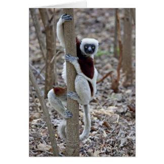 Madagascar, Ankarafantsika Reserve; Ampijoroa; Greeting Card