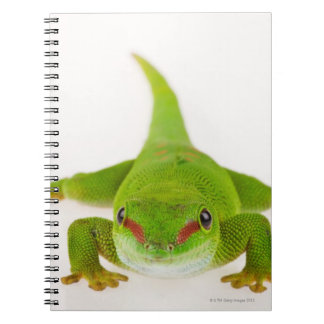 Madagascar day gecko (Phelsuma madagascariensis) Notebook
