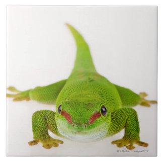 Madagascar day gecko (Phelsuma madagascariensis) Tile