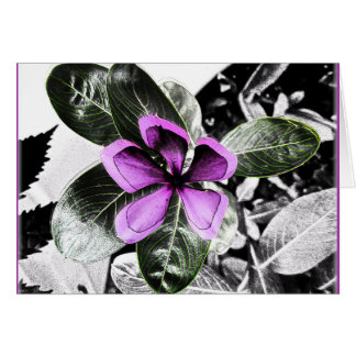 Madagascar Periwinkle Flower Blank Greeting Card