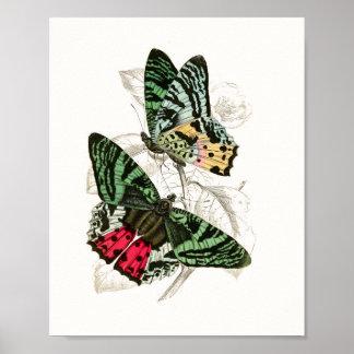 Madagascar Sunset Moth Vintage Poster Print