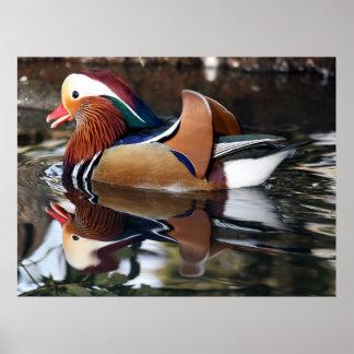 Madarin Duck Poster