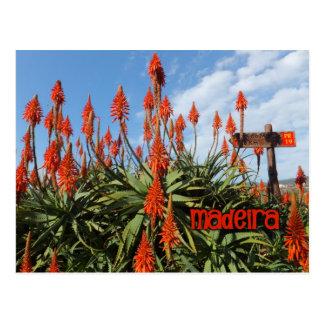 Madeira Aloe postcard, customize Postcard