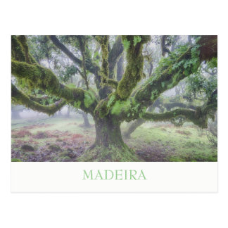 Madeira - Laurel tree postcard with text