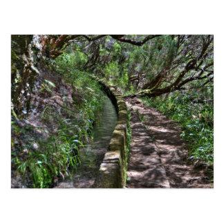 Madeira Road Way Postcard