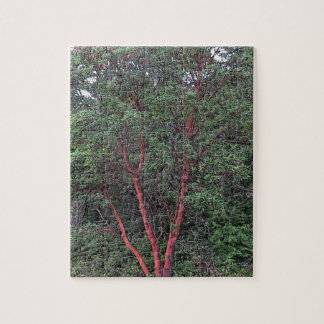 Madrona tree jigsaw puzzle