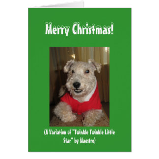 Maestro the Lakeland Terrier Christmas Cards