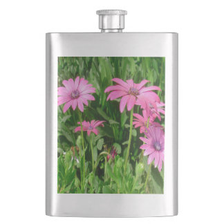 Magenta African Daisies Hip Flask