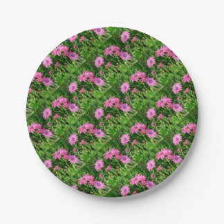 Magenta African Daisies Paper Plate