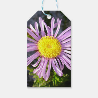 Magenta Aster - A Star of Love and Fidelity Gift Tags