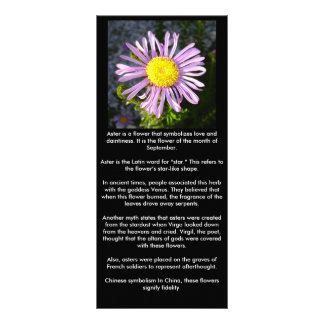Magenta Aster - A Star of Love and Fidelity Rack Card