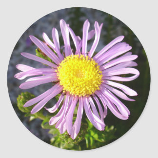Magenta Aster - A Star of Love and Fidelity Round Sticker