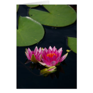 Magenta Lotus Waterlily Card