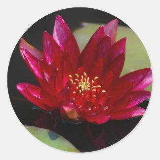 Magenta Lotus Waterlily Classic Round Sticker