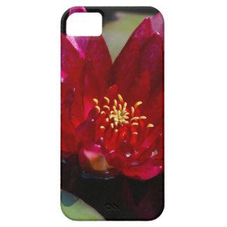 Magenta Lotus Waterlily iPhone 5 Covers
