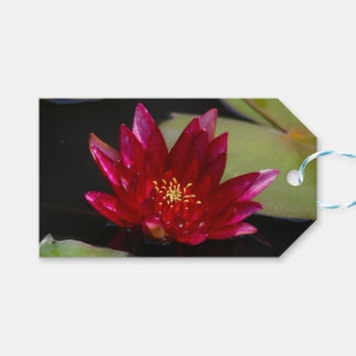 Magenta Lotus Waterlily Pack Of Gift Tags