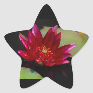 Magenta Lotus Waterlily Star Sticker