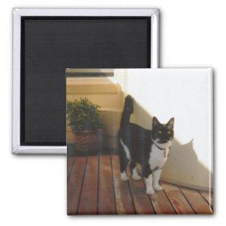 Magic Cat - Customized Magnet