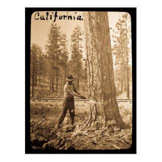 Magic Lantern Logging in the Butte Valley, CA Postcard