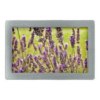 Magic Lavender Belt Buckle