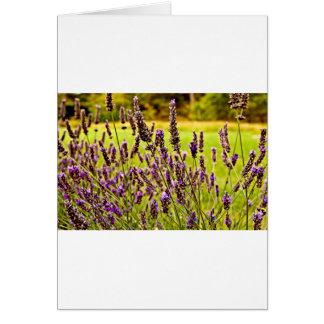 Magic Lavender Card