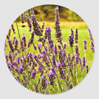 Magic Lavender Classic Round Sticker