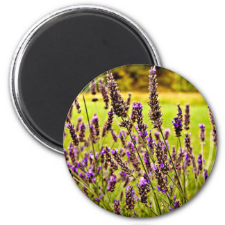 Magic Lavender Magnet