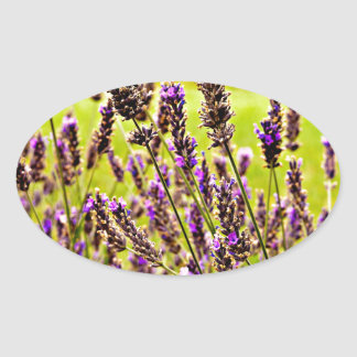 Magic Lavender Oval Sticker
