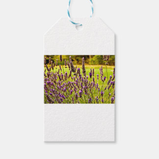 Magic Lavender Pack Of Gift Tags