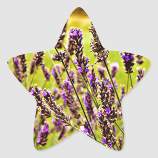 Magic Lavender Star Sticker
