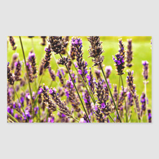 Magic Lavender Sticker