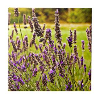Magic Lavender Tile